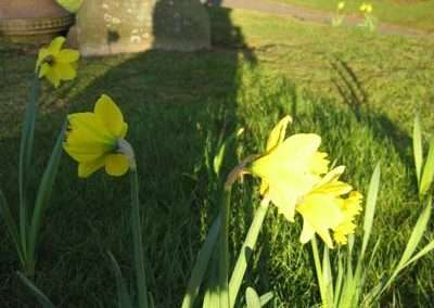 new bulb planting in cemetery - Copy
